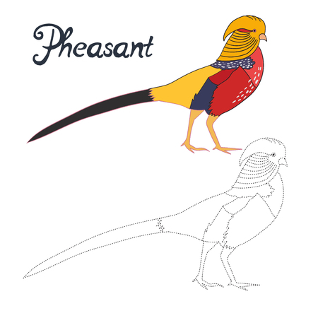 pheasant: Educational game connect the dots to draw pheasant bird cartoon doodle hand drawn vector illustration Illustration