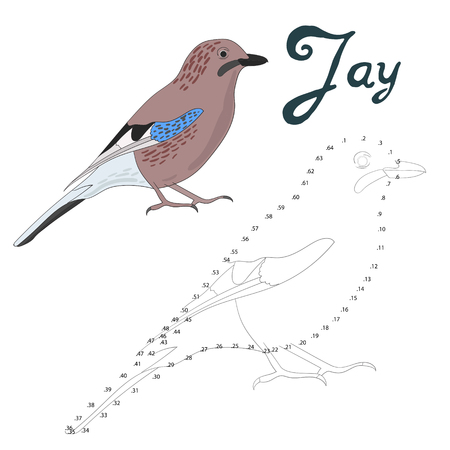 jay: Educational game connect the dots to draw jay bird cartoon doodle hand drawn vector illustration Illustration