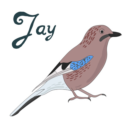 jay: Bird jay cartoon doodle hand drawn vector illustration
