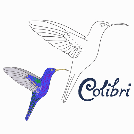 Educational game coloring book colibri bird cartoon doodle hand drawn vector illustration 向量圖像