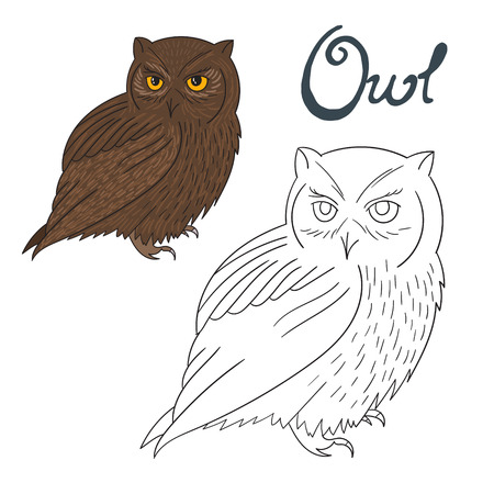 dyeing: Educational game coloring book owl bird cartoon doodle hand drawn vector illustration