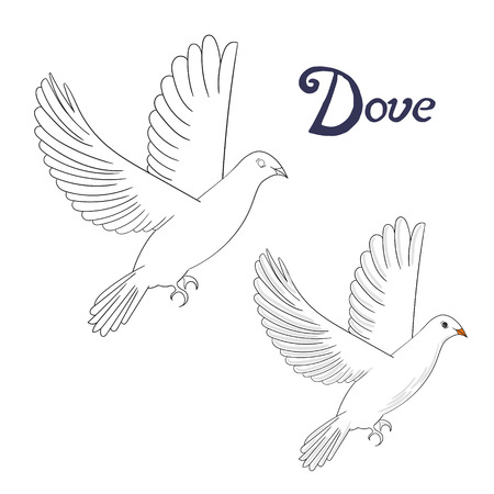 Educational Game Coloring Book Dove Bird Cartoon Doodle Hand Drawn Vector Illustration