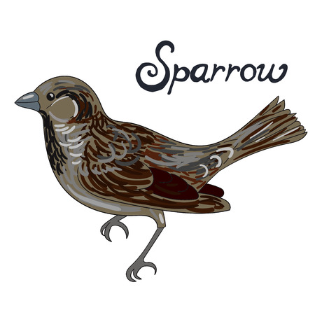 sparrow bird: Bird sparrow cartoon doodle hand drawn vector illustration