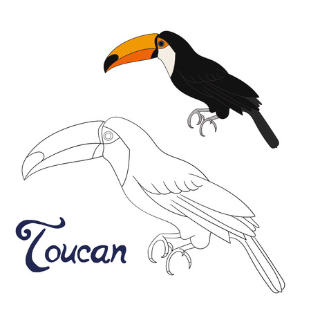 Educational game coloring book toucan bird cartoon doodle hand drawn vector illustration