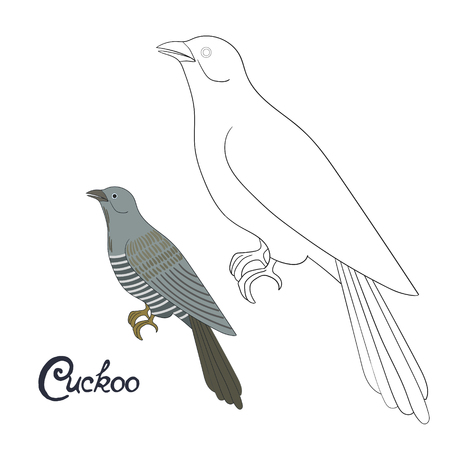 Educational Game Coloring Book Cuckoo Bird Cartoon Doodle Hand Drawn Vector Illustration