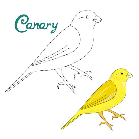 Educational game connect the dots to draw canary bird cartoon doodle hand drawn vector illustration Illustration