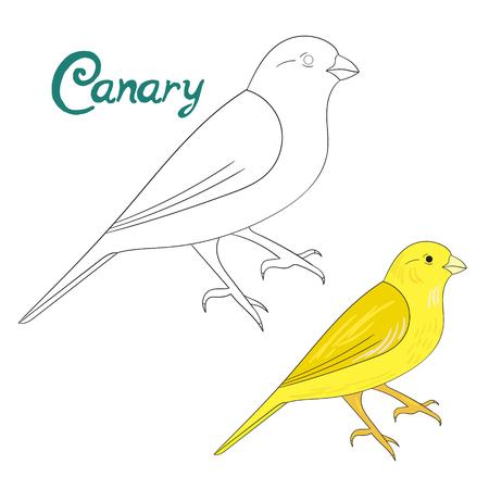 canary bird: Educational game coloring book canary bird cartoon doodle hand drawn vector illustration