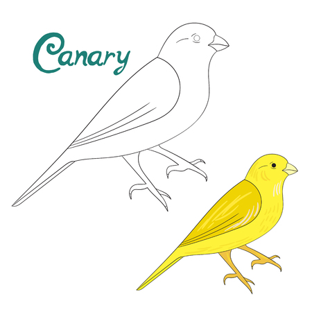 Educational game coloring book canary bird cartoon doodle hand drawn vector illustration