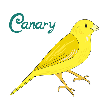 canary: Bird canary cartoon doodle hand drawn vector illustration Illustration