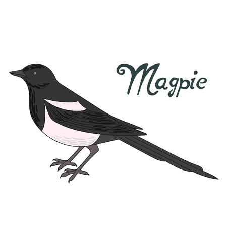 magpie: Bird magpie cartoon doodle hand drawn vector illustration