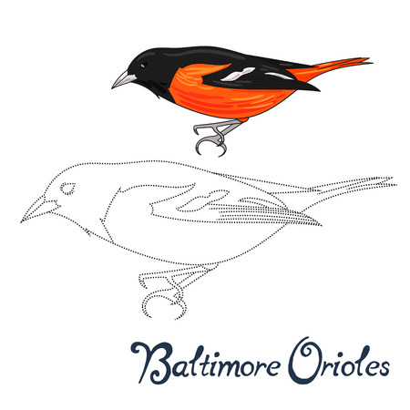 Educational game connect the dots to draw baltimore orioles bird cartoon doodle hand drawn vector illustration Illustration