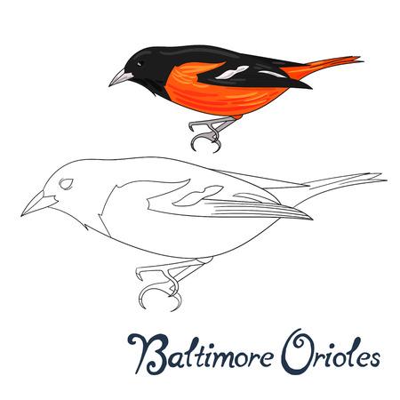 Educational game coloring book baltimore orioles bird cartoon doodle hand drawn vector illustration