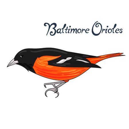 baltimore: Bird baltimore orioles cartoon doodle hand drawn vector illustration