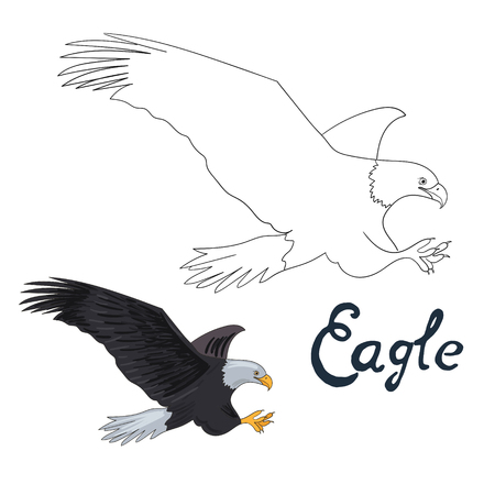 dyeing: Educational game coloring book eagle bird  cartoon doodle hand drawn vector illustration