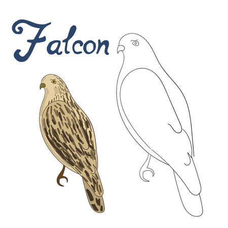 falcon: Educational game coloring book falcon bird cartoon doodle hand drawn vector illustration