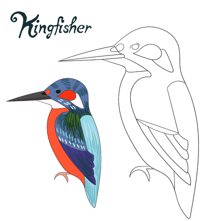 dyeing: Educational game coloring book kingfisher bird cartoon doodle hand drawn vector illustration Illustration