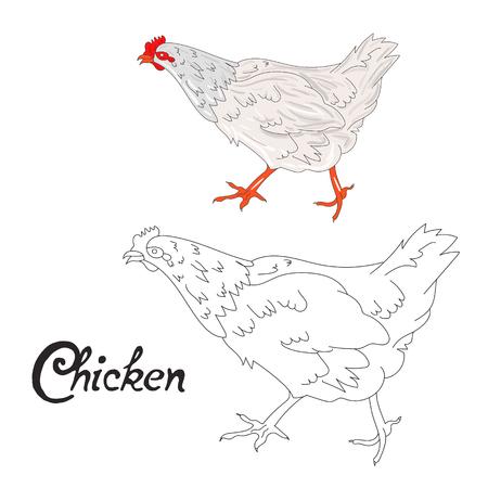 Educational Game Coloring Book Chicken Hen Bird Cartoon Doodle Hand Drawn Vector Illustration