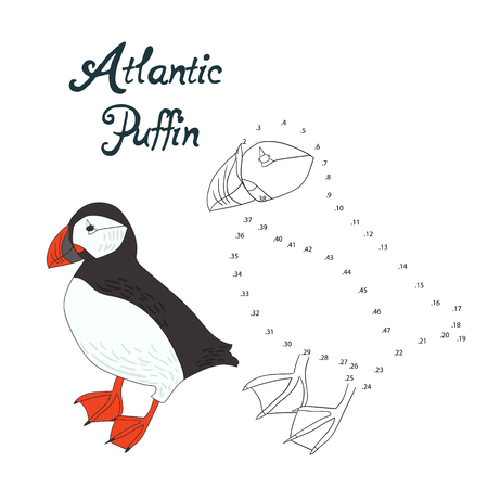 migrating birds: Educational game connect the dots to draw atlantic puffin bird cartoon doodle hand drawn vector illustration