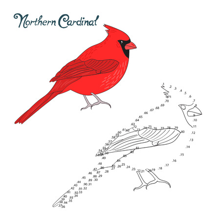 migratory birds: Educational game connect the dots to draw nothern cardinal bird  cartoon doodle hand drawn vector illustration