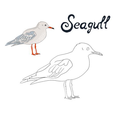 game bird: Educational game coloring book seagull bird  vector illustration