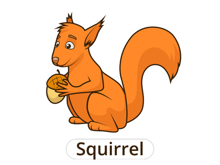 nocturnal animal: Forest animal squirrel cartoon for children vector illustration Illustration
