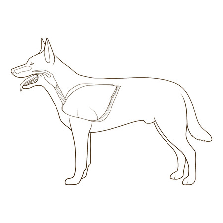 Respiratory system of the dog  medical veterinary  vector illustration