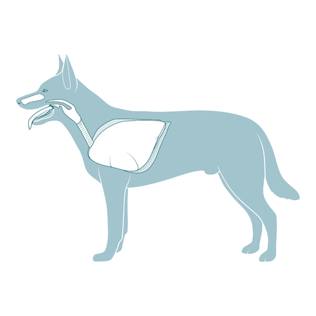 Respiratory system of the dog  medical veterinary vector illustration Illustration