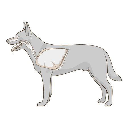 palate: Respiratory system of the dog  medical veterinary  vector illustration