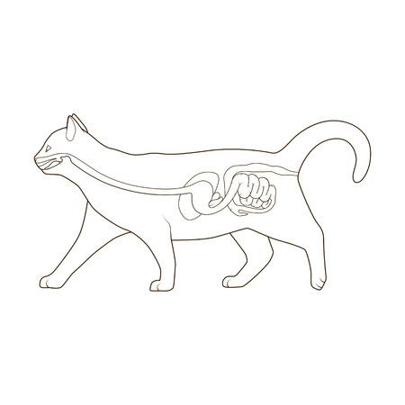El Sistema Digestivo Del Gato Veterinaria Médica Ilustración