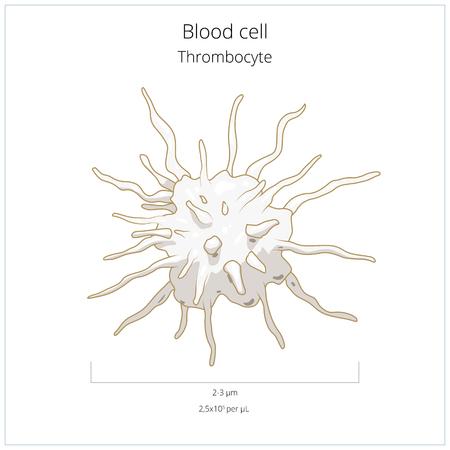 misery: Platelet thrombocyte blood cell medical science educational vector illustration Illustration