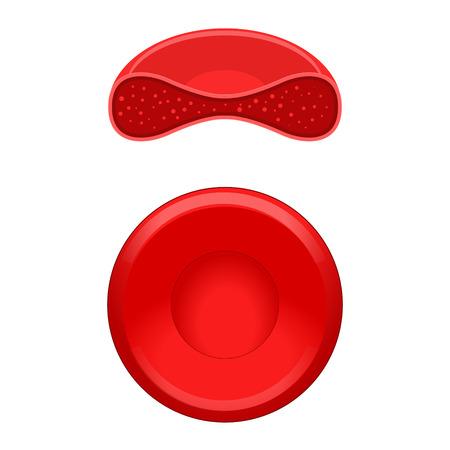 Globules rouges érythrocytes science médicale vecteur éducatif illustration