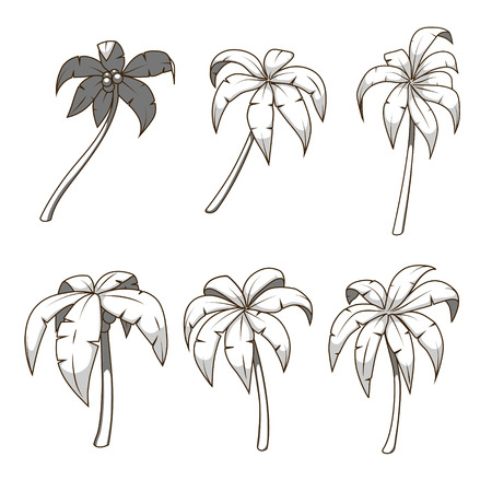 colorless: Palm tree set colorless hand drawn vector illustration Illustration