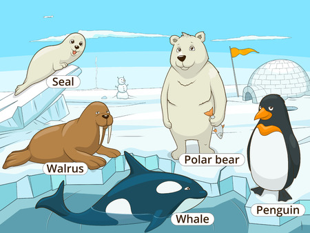 fur seal: Arctic animals educational game for kids vector illustration, educational game, animals