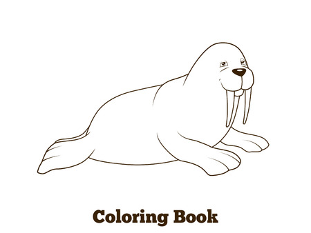 Walrus cartoon coloring book colorful funny hand drawn vector illustration