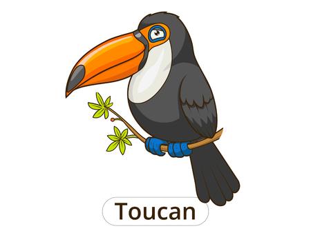 toucan: Toucan bird cartoon colorful funny vector illustration