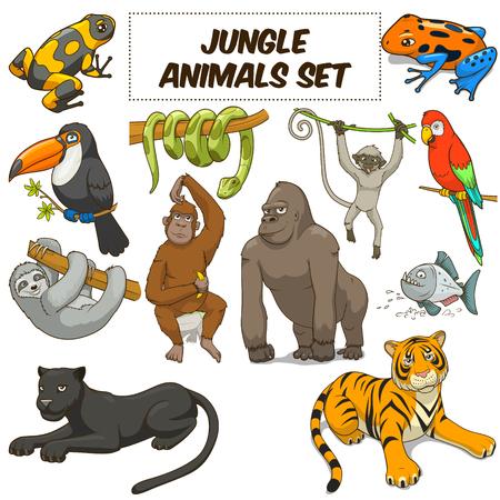 állatok: Rajzfilm vicces dzsungel állatok színes szett vektoros illusztráció
