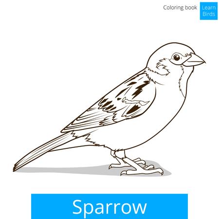 sparrow: Sparrow learn birds educational game vector illustration Illustration