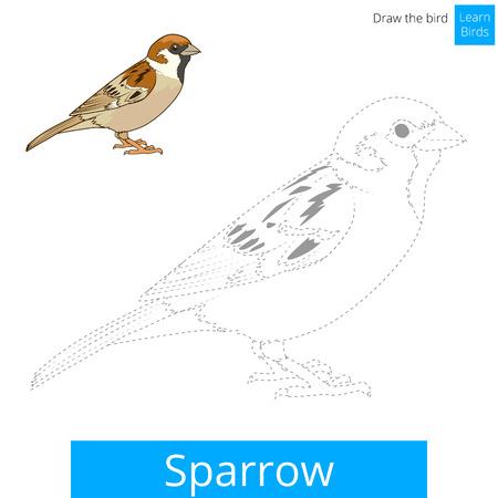 Gorrión aprender juego educativo pájaros aprender a dibujar ilustración vectorial Ilustración de vector