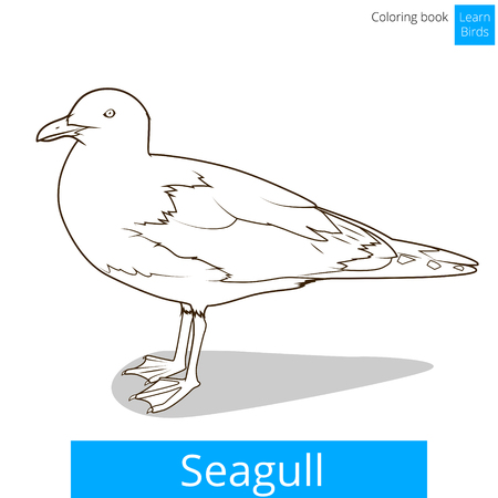 Seagull Learn Birds Educational Game Coloring Book Vector Illustration Stock Photo