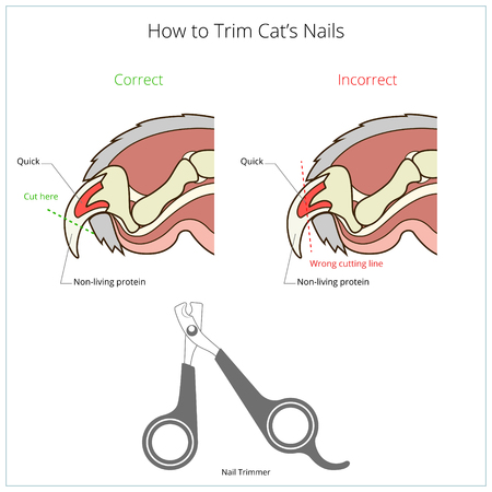 instruction: How to cut cat nail veterinary medicine instruction vector illustration. Educational material Illustration