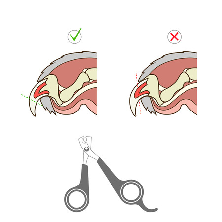 how to: How to cut cat nail veterinary medicine instruction vector illustration. Educational material Illustration