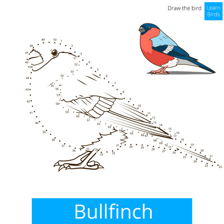Bullfinch learn birds educational game learn to draw vector illustration
