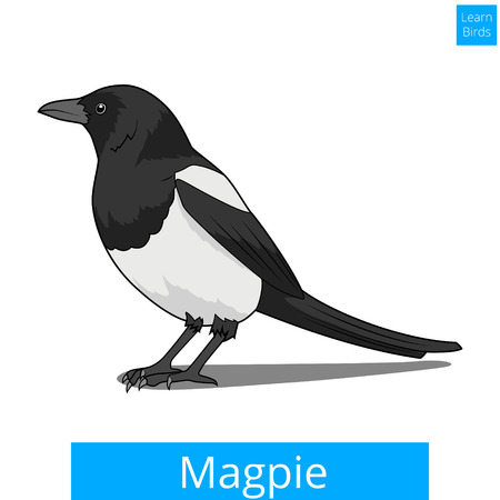magpie: Magpie learn birds educational game vector illustration