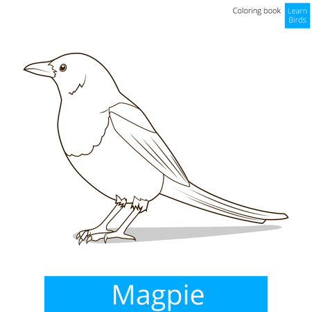 magpie: Magpie learn birds educational game coloring book vector illustration Illustration
