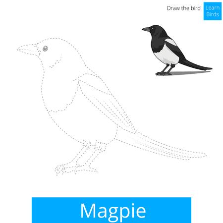 dessin enfants: Magpie apprendre jeu �ducatif oiseaux apprendre � dessiner illustration vectorielle