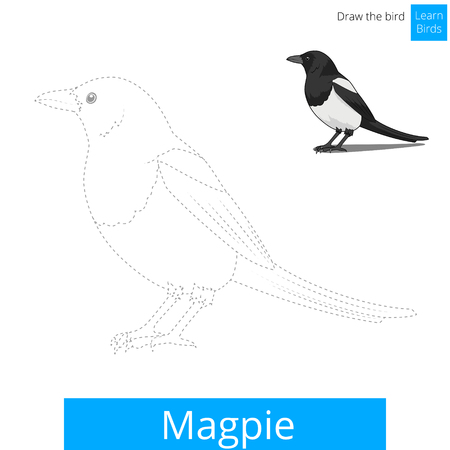 child drawing: Magpie learn birds educational game learn to draw vector illustration Illustration