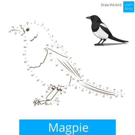 migratory: Magpie learn birds educational game learn to draw vector illustration Illustration