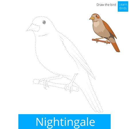 ruiseñor: Nightingale aprender juego educativo pájaros aprender a dibujar ilustración vectorial