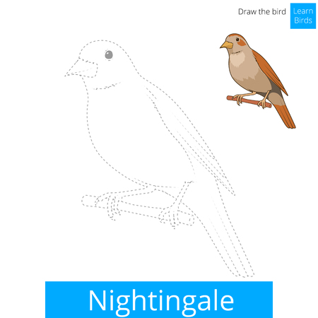 child drawing: Nightingale learn birds educational game learn to draw vector illustration