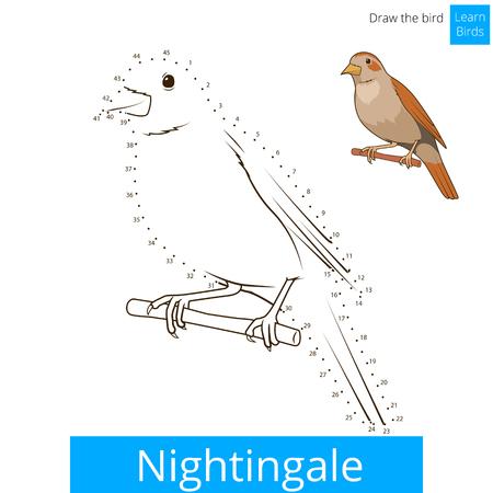 dessin enfants: Nightingale apprendre jeu �ducatif oiseaux apprendre � dessiner illustration vectorielle